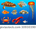 Different kinds of wild animals underwater 30930390
