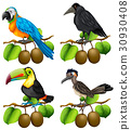 Different types of birds on kiwi branch 30930408