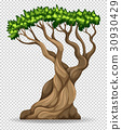 Big tree on transparent background 30930429