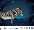 Zebra in the forest at night 30930436