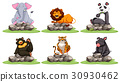 Different types of wild animals on rocks 30930462