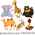 Six different types of wild animals 30930470