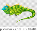 Wild lizard on transparent background 30930484