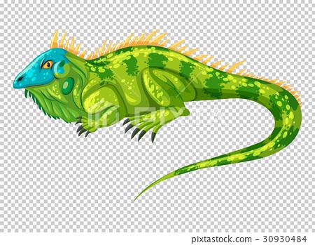 Wild lizard on transparent background 30930484