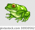 Green frog on transparent background 30930562