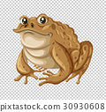 frog, toad, reptile 30930608