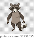 Raccoon standing on transparent background 30930655