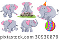 Gray elephant in different actions 30930879