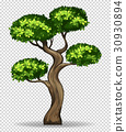 Bonsai tree on transparent background 30930894