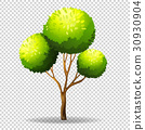 Gree tree on transparent background 30930904