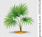 green tropical plant 30930928