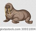 Big walrus on transparent background 30931004