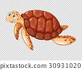 Sea turtle swimming on transparent background 30931020