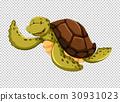 Sea turtle on transparent background 30931023