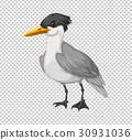 Wild bird on transparent background 30931036