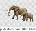 Wild elephants on transparent background 30931040
