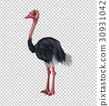 Ostrich on transparent background 30931042