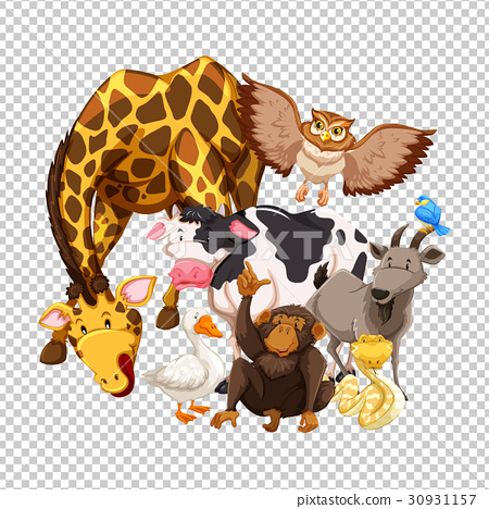 Many wild animals on transparent background 30931157