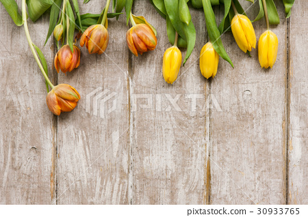 Row of yellow tulips. Spring background 30933765
