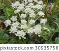 花朵 花 花卉 30935758