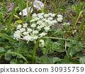 花朵 花 花卉 30935759