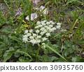 花朵 花 花卉 30935760