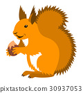 Cute smiling red squirrel with nut cartoon 30937053