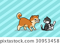 Vector illustration Shiba dogc and cat  30953458