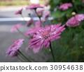 花瓣 粉色鮮花 30954638