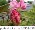 花瓣 粉色鮮花 30954639