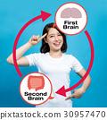 大腦 頭腦 小腸 30957470