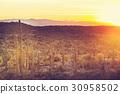 仙人掌 沙漠 自然 30958502