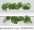 Green summer tropical header exotic palm leaves 30960992