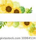 向日葵 花朵 花卉 30964534