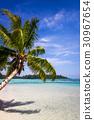 beach tropical paradise 30967654