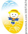 水稻 稻穗 稻田 30973674