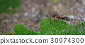 Macro shot of an ant. 30974300