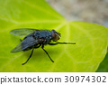 Macro shot of a fly sitting on a green leaf. 30974302