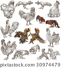 Poultry - An hand drawn full sized pack on white. 30974479
