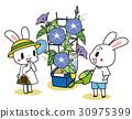 牽牛花 植物灌溉 兔子 30975399