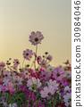 가을, 가을꽃, 계절 30984046
