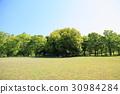 공원, 파크, 수목 30984284