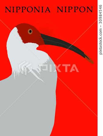 ibi, japanese crested ibi, ibis 30984546