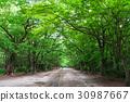 신록, 봄, 녹색 30987667