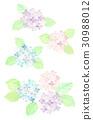 绣球花 水彩 水彩画 30988012