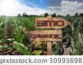 GMO and Organic Sign on a Corn Field 30993698