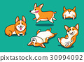 Collection of cute cartoon dogs breed Welsh Corgi 30994092