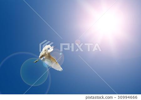 Flying birds on blue sky 30994666