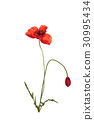 Bouquet of poppies. 30995434