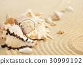sand, shell, beach 30999192
